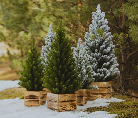 contact christmas tree